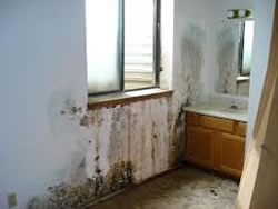 Water Damage Restoration Indianapolis